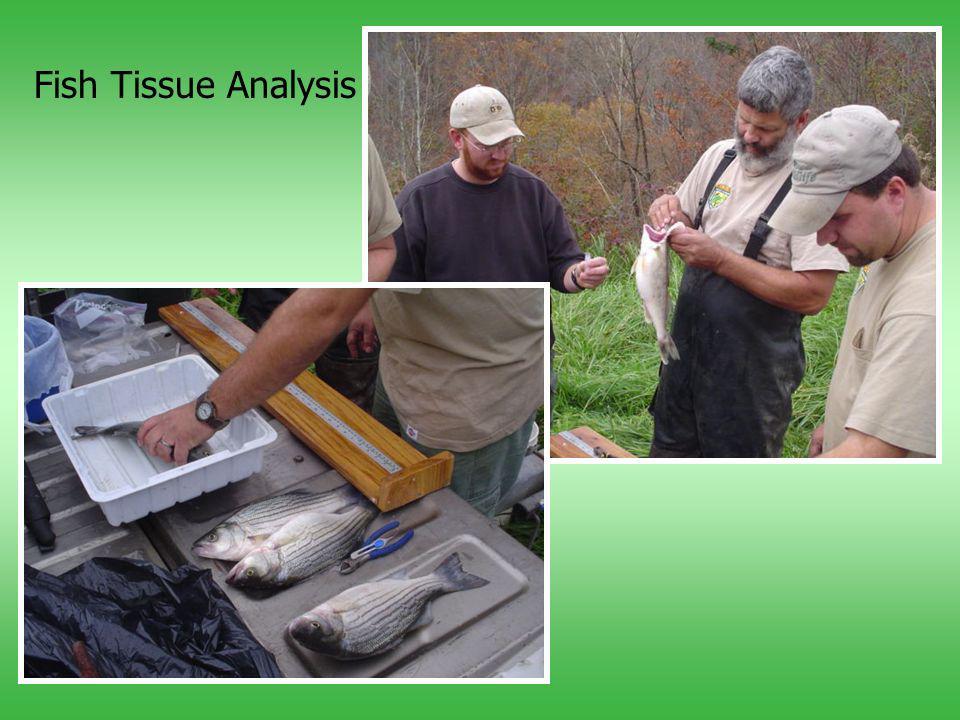 Fish Tissue Analysis