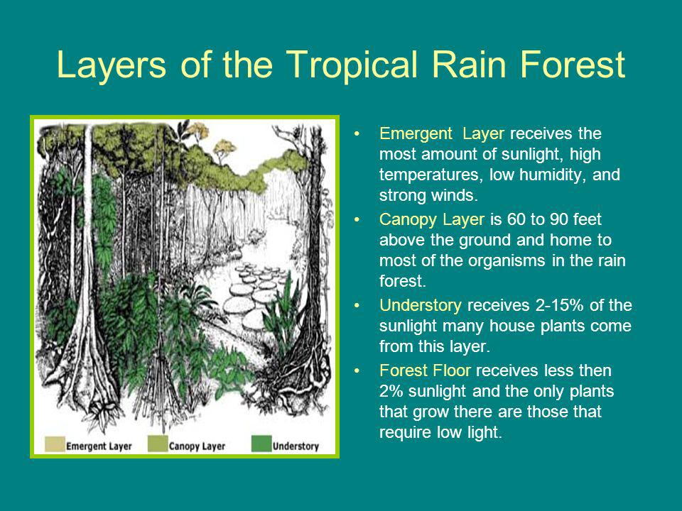 Layers of the Tropical Rain Forest Emergent Layer receives the most amount of sunlight, high temperatures, low humidity, and strong winds.