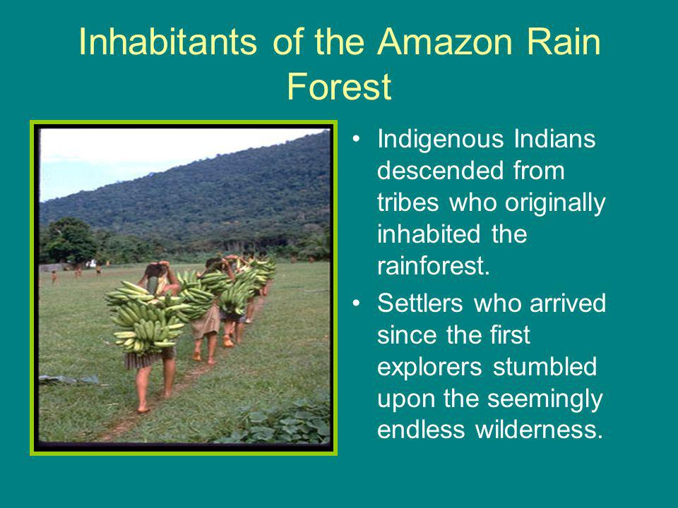 Inhabitants of the Amazon Rain Forest Indigenous Indians descended from tribes who originally inhabited the rainforest.