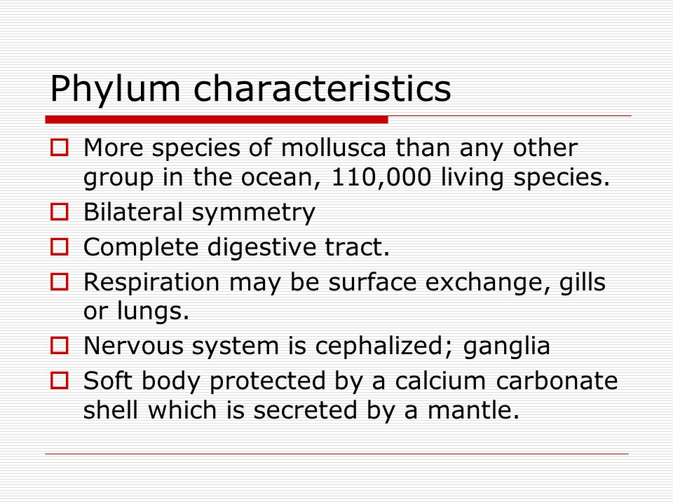 Phylum characteristics More species of mollusca than any other group in the ocean, 110,000 living species. Bilateral symmetry Complete digestive tract