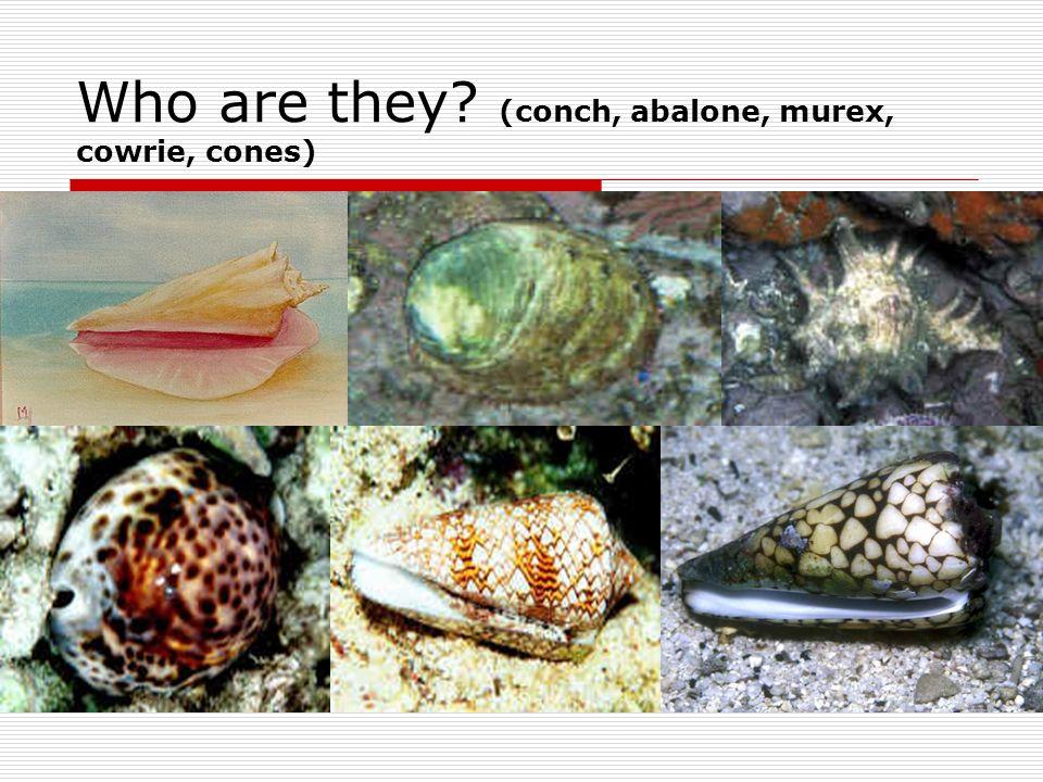 Class Cephalopoda Head-foot Most complex brain of all invertebrates.