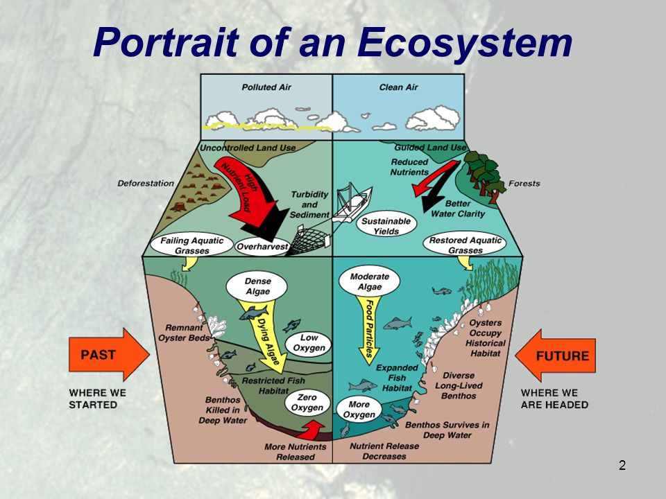 2 Portrait of an Ecosystem
