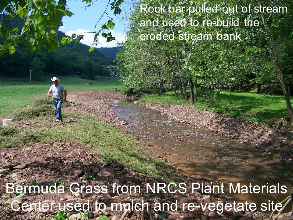 Bermuda Grass from NRCS Plant Materials Center used to mulch and re-vegetate site Rock bar pulled out of stream and used to re-build the eroded stream