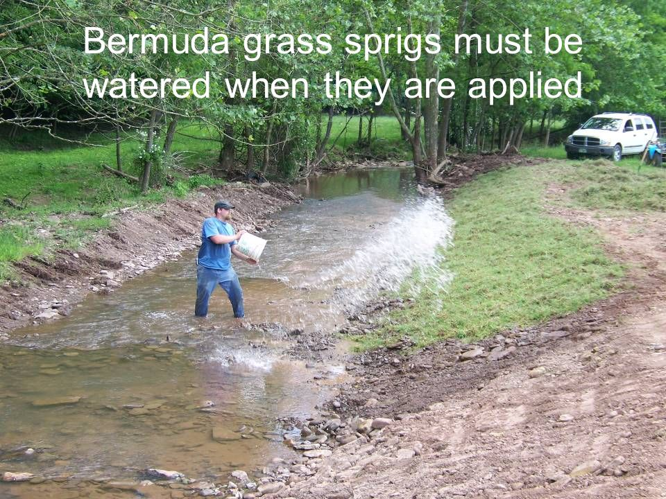 Bermuda grass sprigs must be watered when they are applied