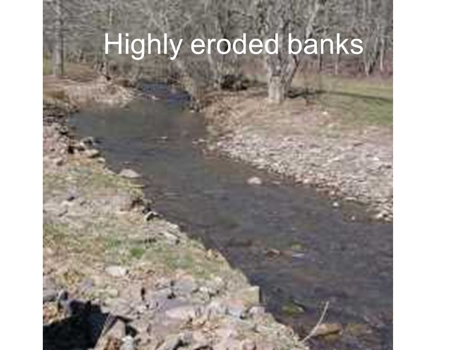 Highly eroded banks