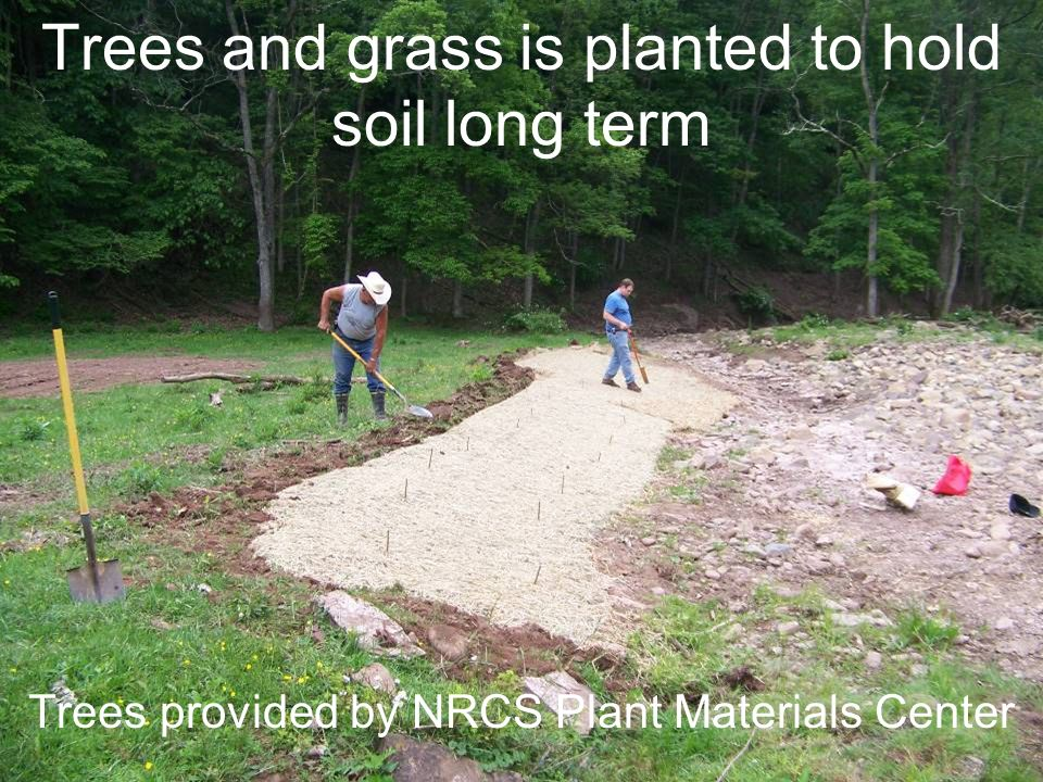 Trees and grass is planted to hold soil long term Trees provided by NRCS Plant Materials Center