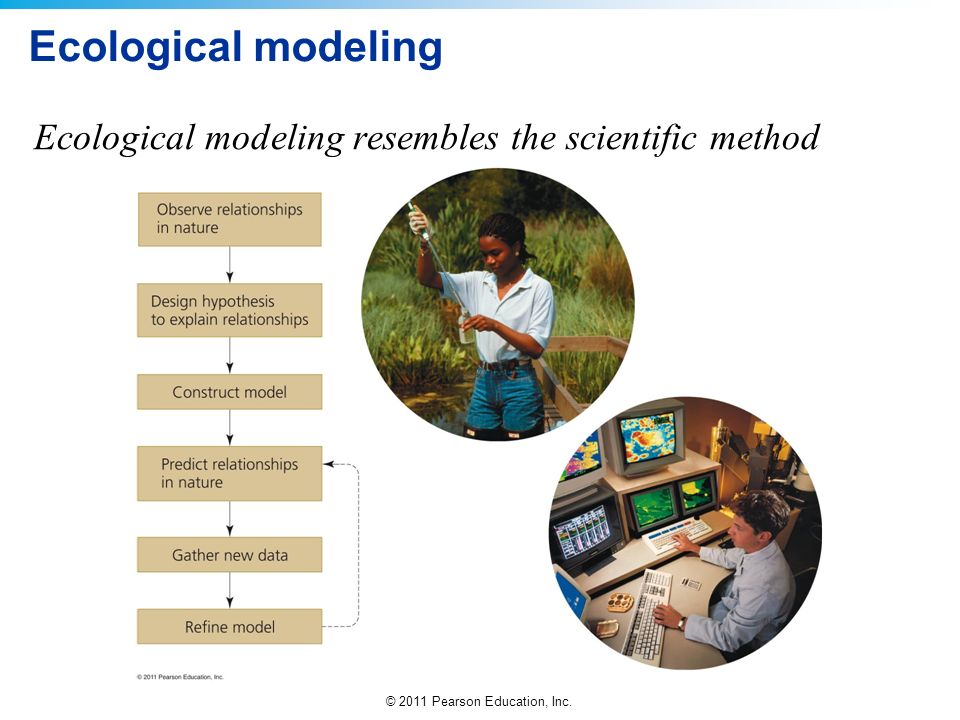 © 2011 Pearson Education, Inc. Ecological modeling Ecological modeling resembles the scientific method