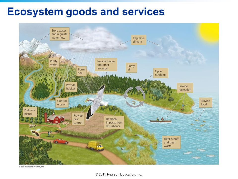 © 2011 Pearson Education, Inc. Ecosystem goods and services
