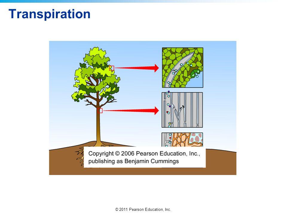 © 2011 Pearson Education, Inc. Transpiration