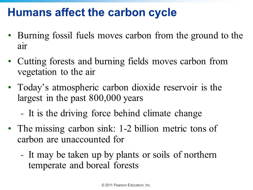 © 2011 Pearson Education, Inc. Humans affect the carbon cycle Burning fossil fuels moves carbon from the ground to the air Cutting forests and burning