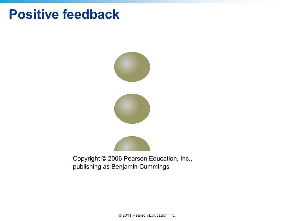 © 2011 Pearson Education, Inc. Positive feedback