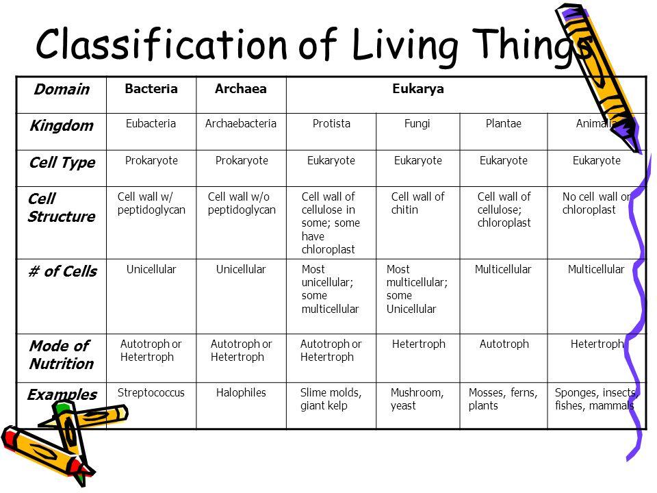Classification of Living Things Domain BacteriaArchaeaEukarya Kingdom EubacteriaArchaebacteriaProtistaFungiPlantaeAnimalia Cell Type Prokaryote Eukary