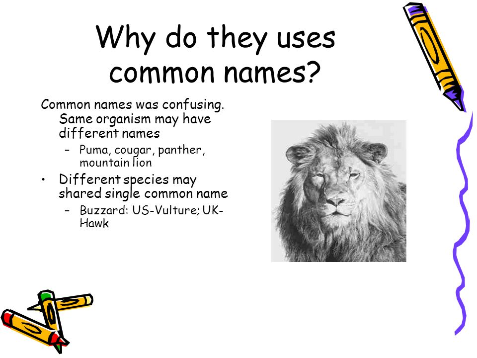 Why do they uses common names? Common names was confusing. Same organism may have different names –Puma, cougar, panther, mountain lion Different spec
