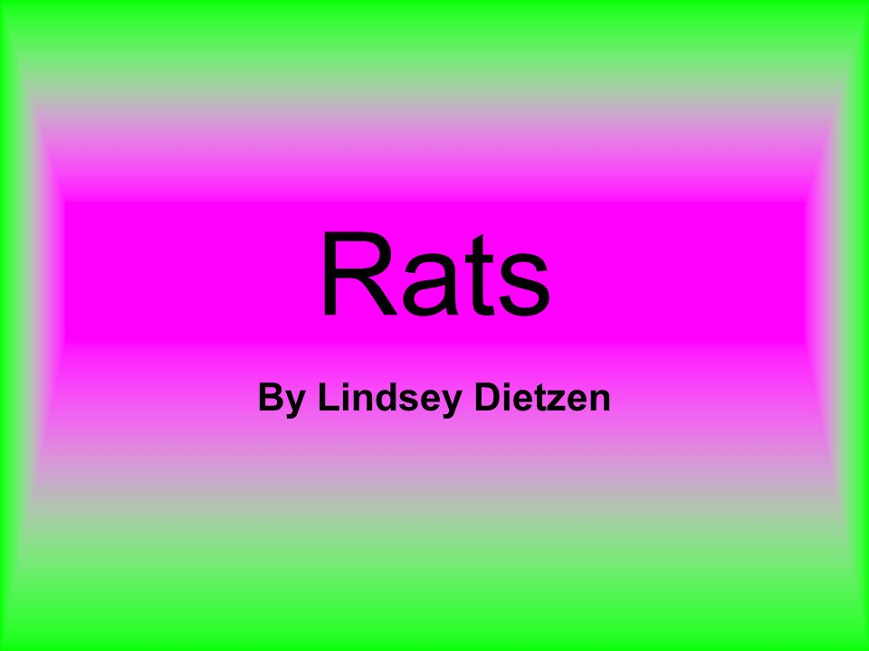Rats By Lindsey Dietzen