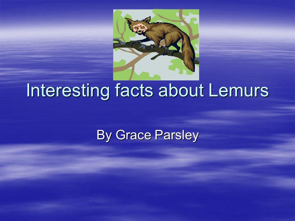 Interesting facts about Lemurs By Grace Parsley