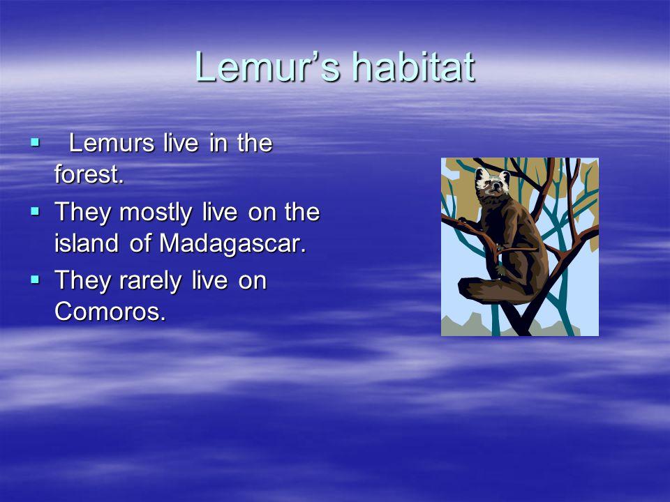 Lemurs habitat Lemurs live in the forest. Lemurs live in the forest. They mostly live on the island of Madagascar. They mostly live on the island of M