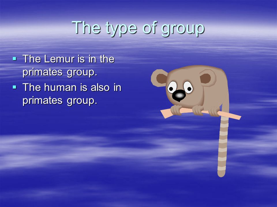 The type of group The Lemur is in the primates group. The Lemur is in the primates group. The human is also in primates group. The human is also in pr