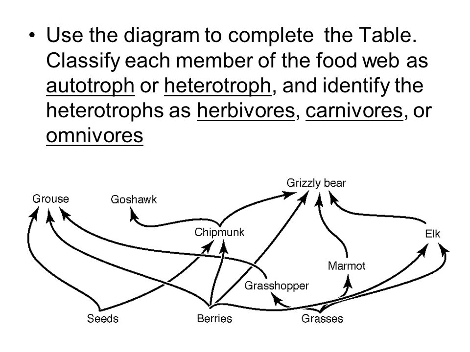 Use the diagram to complete the Table. Classify each member of the food web as autotroph or heterotroph, and identify the heterotrophs as herbivores,