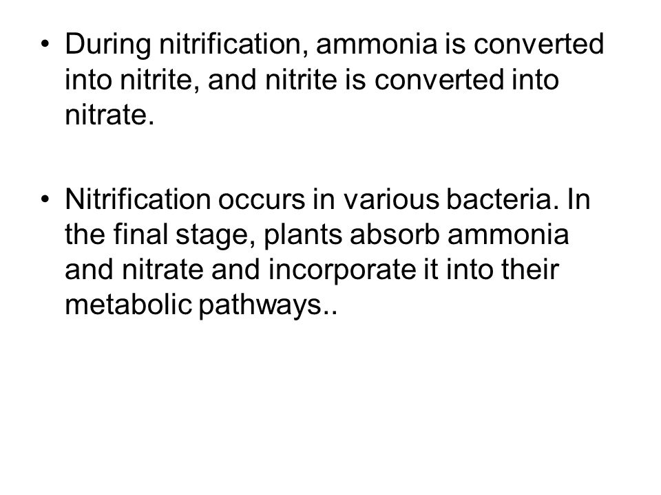 During nitrification, ammonia is converted into nitrite, and nitrite is converted into nitrate. Nitrification occurs in various bacteria. In the final