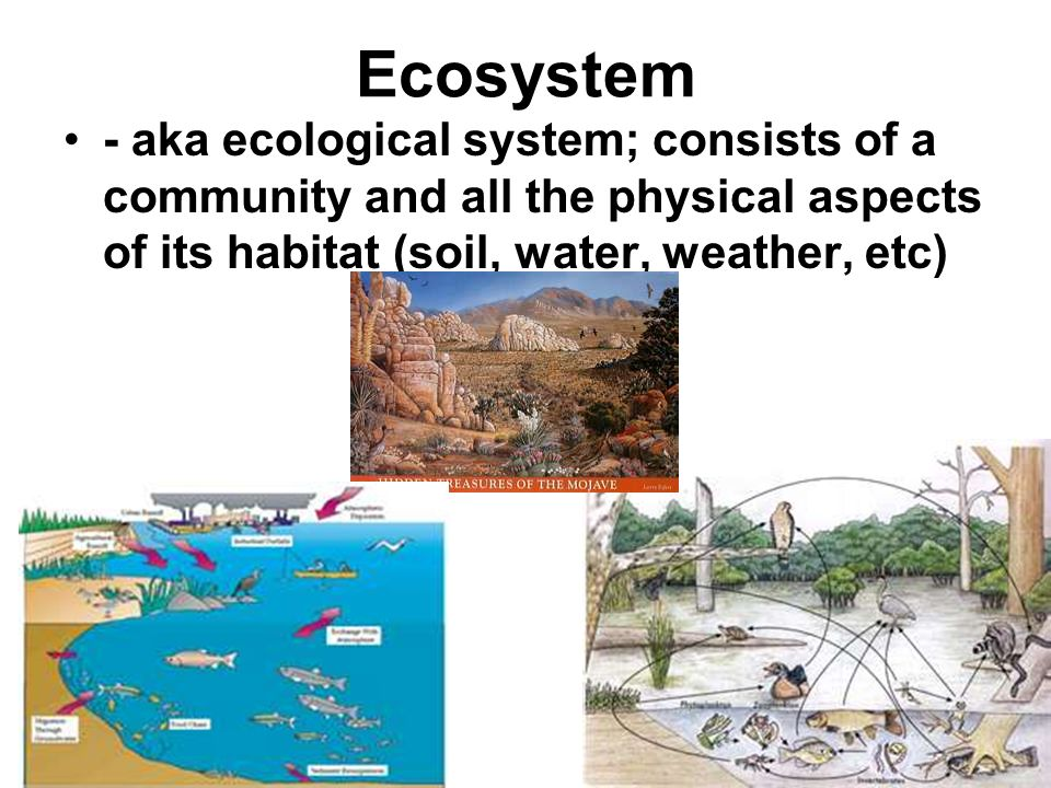 Ecosystem - aka ecological system; consists of a community and all the physical aspects of its habitat (soil, water, weather, etc)