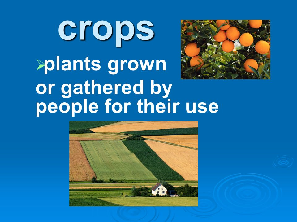 crops plants grown or gathered by people for their use