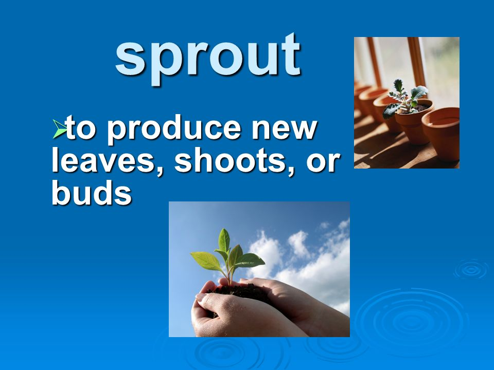sprout to produce new leaves, shoots, or buds to produce new leaves, shoots, or buds