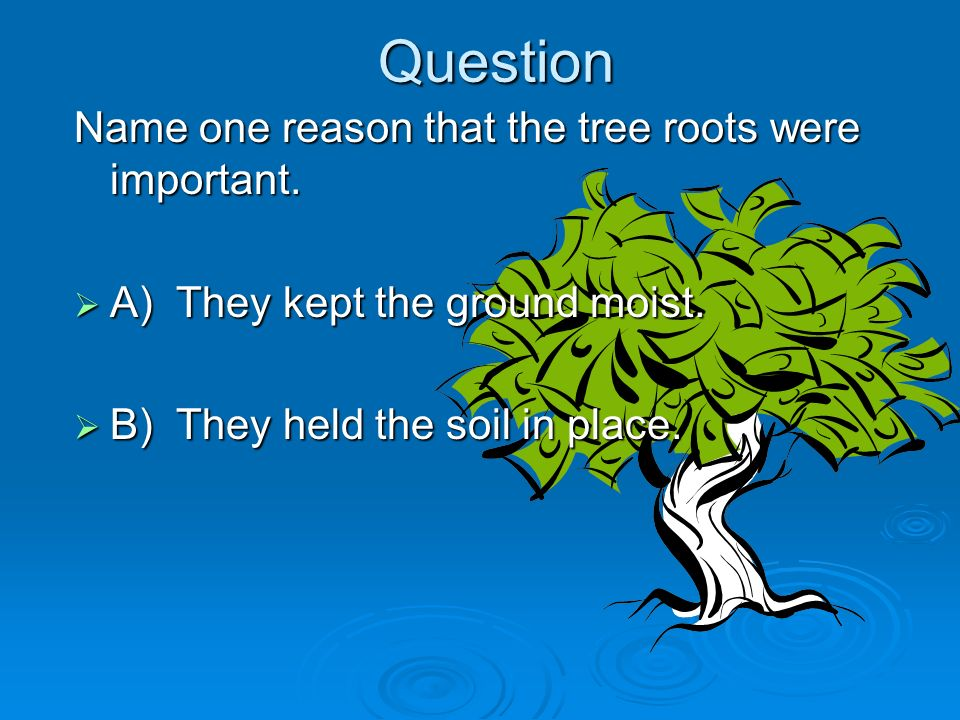 Question Name one reason that the tree roots were important. A) They kept the ground moist. A) They kept the ground moist. B) They held the soil in pl