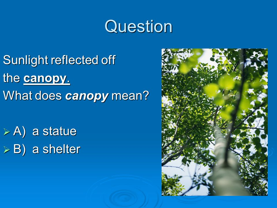 Question Sunlight reflected off the canopy. What does canopy mean? A) a statue A) a statue B) a shelter B) a shelter