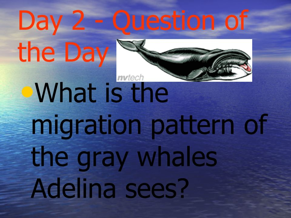 Question of the Week TE 292m What patterns in nature guide the lives of animals?