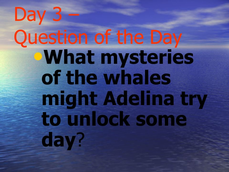 Day 2 - Question of the Day What is the migration pattern of the gray whales Adelina sees?