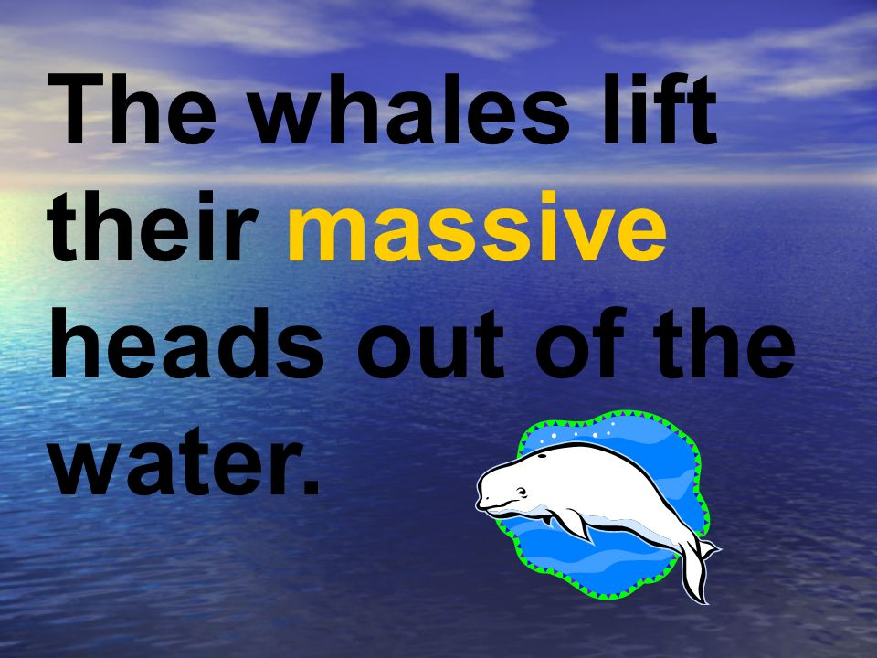 The whales lift their massive heads out of the water.