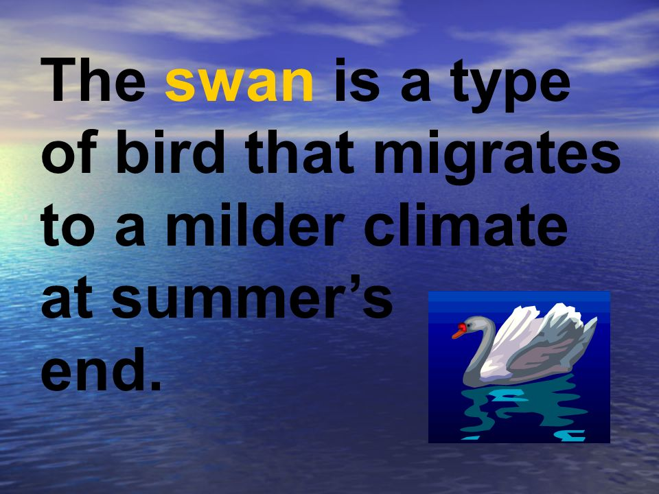 The swan is a type of bird that migrates to a milder climate at summers end.