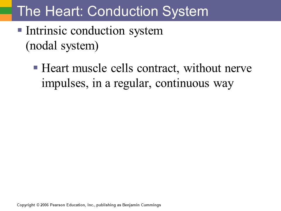 The Heart: Conduction System Intrinsic conduction system (nodal system) Heart muscle cells contract, without nerve impulses, in a regular, continuous