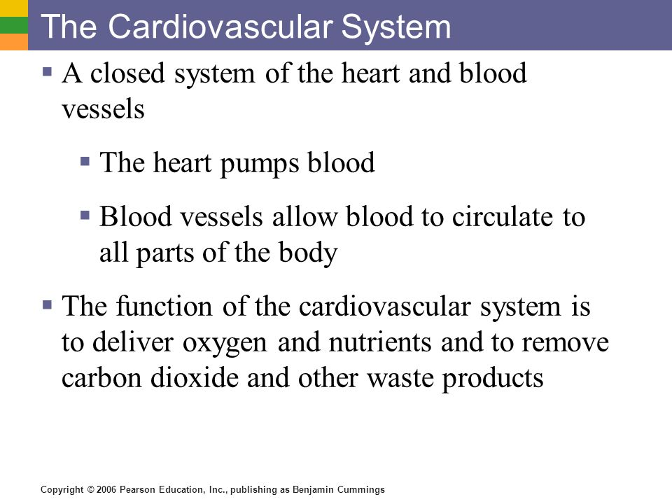 Copyright © 2006 Pearson Education, Inc., publishing as Benjamin Cummings The Cardiovascular System A closed system of the heart and blood vessels The