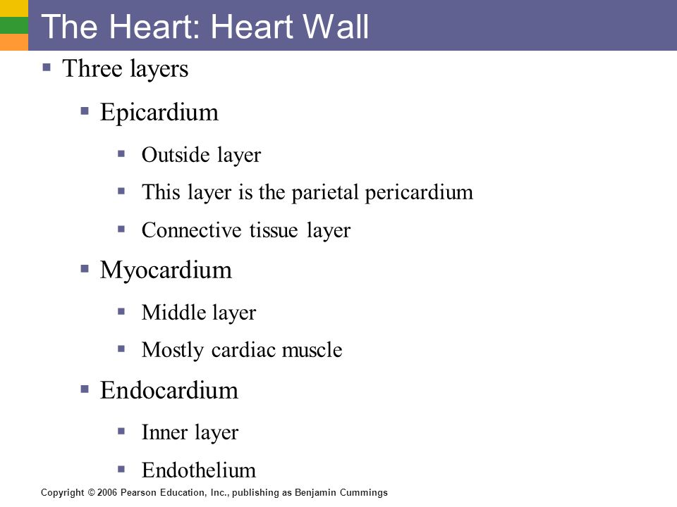 Copyright © 2006 Pearson Education, Inc., publishing as Benjamin Cummings The Heart: Heart Wall Three layers Epicardium Outside layer This layer is th