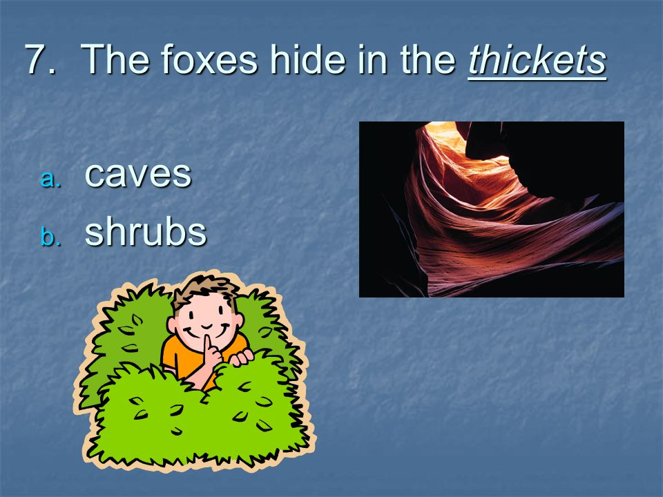 7. The foxes hide in the thickets caves caves shrubs shrubs
