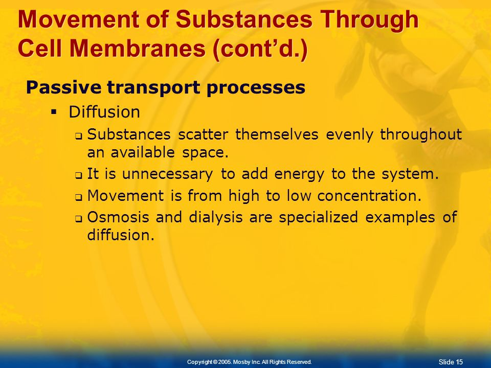 Slide 15 Copyright © 2005. Mosby Inc. All Rights Reserved. Movement of Substances Through Cell Membranes (contd.) Passive transport processes Diffusio