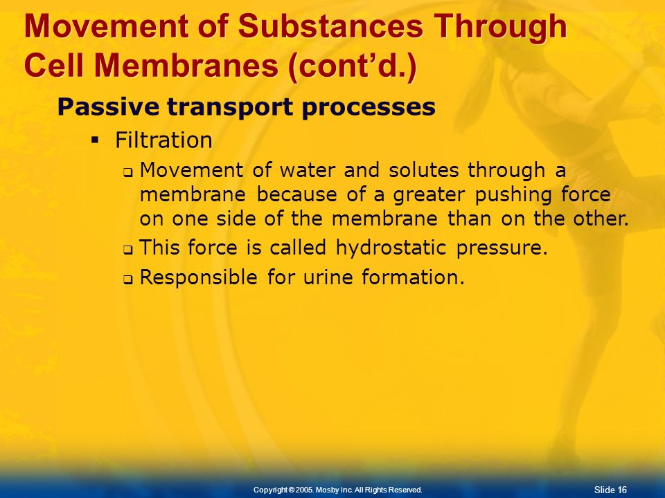 Slide 16 Copyright © 2005. Mosby Inc. All Rights Reserved. Movement of Substances Through Cell Membranes (contd.) Passive transport processes Filtrati