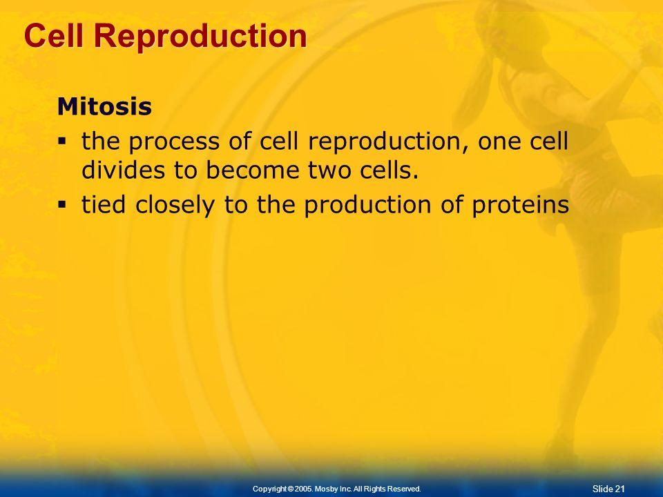 Slide 21 Copyright © 2005. Mosby Inc. All Rights Reserved. Cell Reproduction Mitosis the process of cell reproduction, one cell divides to become two
