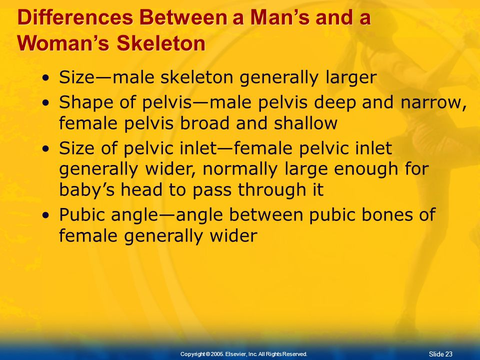 Slide 22 Copyright © 2005. Elsevier, Inc. All Rights Reserved. Divisions of Skeleton (contd.) Bones of the right foot