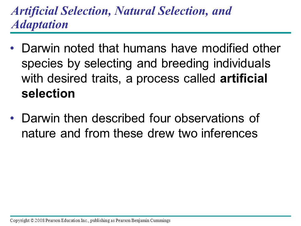 Copyright © 2008 Pearson Education Inc., publishing as Pearson Benjamin Cummings Artificial Selection, Natural Selection, and Adaptation Darwin noted that humans have modified other species by selecting and breeding individuals with desired traits, a process called artificial selection Darwin then described four observations of nature and from these drew two inferences