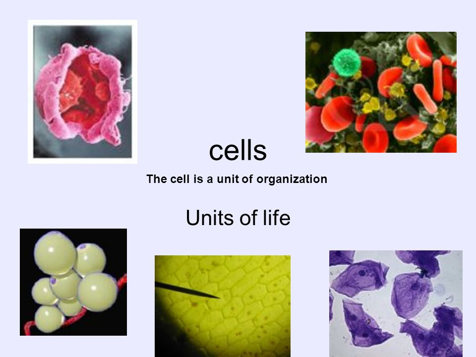 cells Units of life The cell is a unit of organization