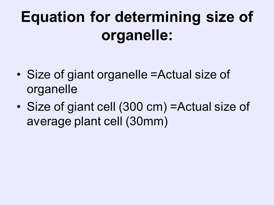 Equation for determining size of organelle: Size of giant organelle =Actual size of organelle Size of giant cell (300 cm) =Actual size of average plan