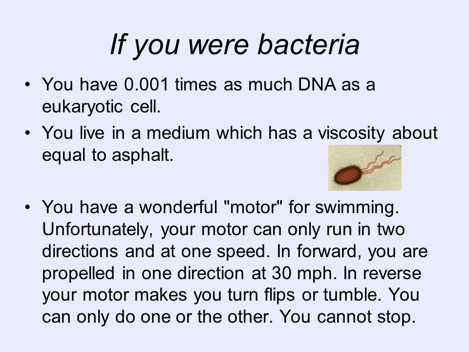 If you were bacteria You have 0.001 times as much DNA as a eukaryotic cell. You live in a medium which has a viscosity about equal to asphalt. You hav
