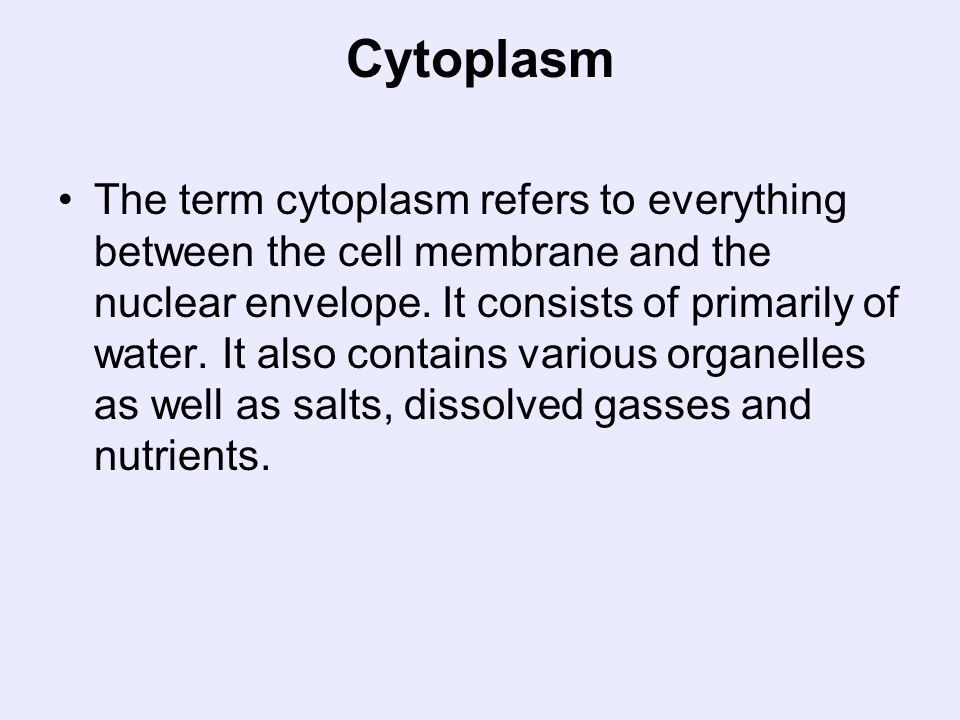 Cytoplasm The term cytoplasm refers to everything between the cell membrane and the nuclear envelope. It consists of primarily of water. It also conta