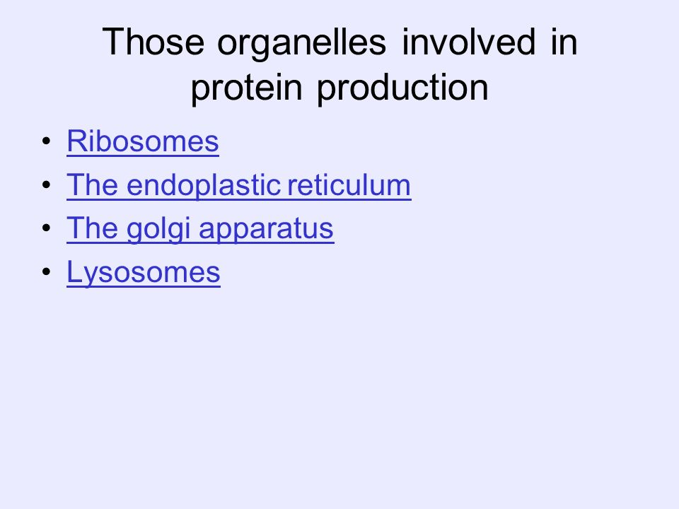 Those organelles involved in protein production Ribosomes The endoplastic reticulum The golgi apparatus Lysosomes