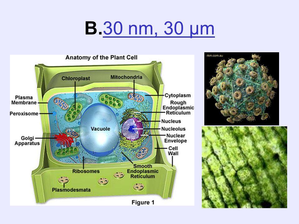 B.30 nm, 30 µm30 nm, 30 µm