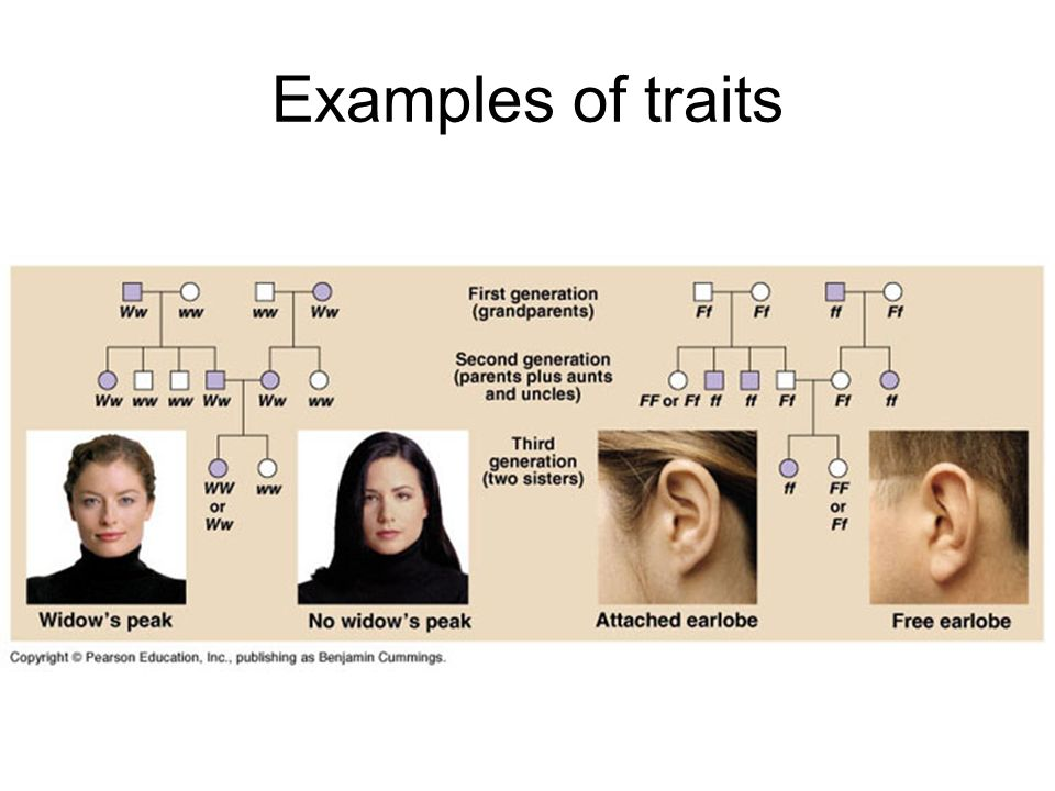 Examples of traits