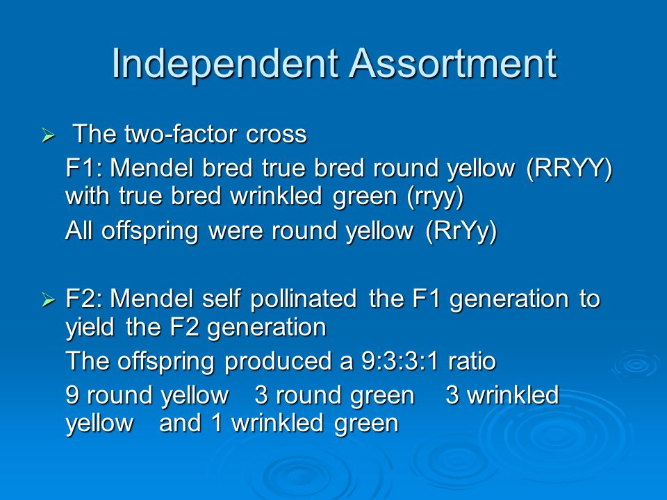 Independent Assortment The two-factor cross The two-factor cross F1: Mendel bred true bred round yellow (RRYY) with true bred wrinkled green (rryy) Al