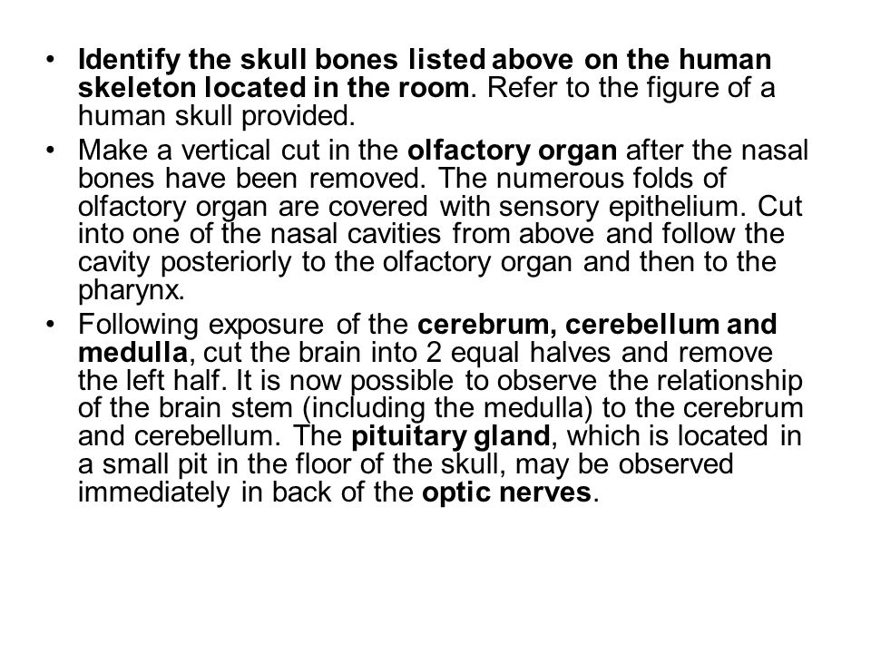 Identify the skull bones listed above on the human skeleton located in the room. Refer to the figure of a human skull provided. Make a vertical cut in